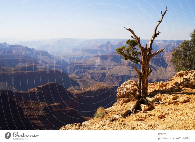 Nature Tree Blue Calm Yellow Gray Landscape Brown Environment Earth Desert Beautiful weather Wanderlust Canyon USA Grand Canyon