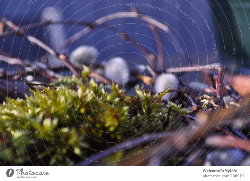 wreath Nature Plant Spring Bushes Moss Growth Simple Beautiful Dry Wild Brown Green White Modest Colour photo Exterior shot Experimental Evening Blur