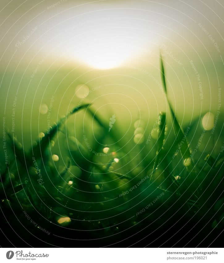 Nature Green Plant Summer Meadow Grass Spring Field Drops of water Earth Drop Dew Water Structures and shapes