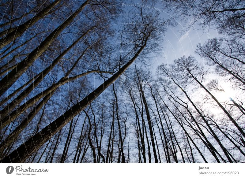 trees are only people, too. Dance Plant Sky Tree Forest Growth Aggression Blue Discordant Far-off places Attachment Diagonal Brandenburg Colour photo