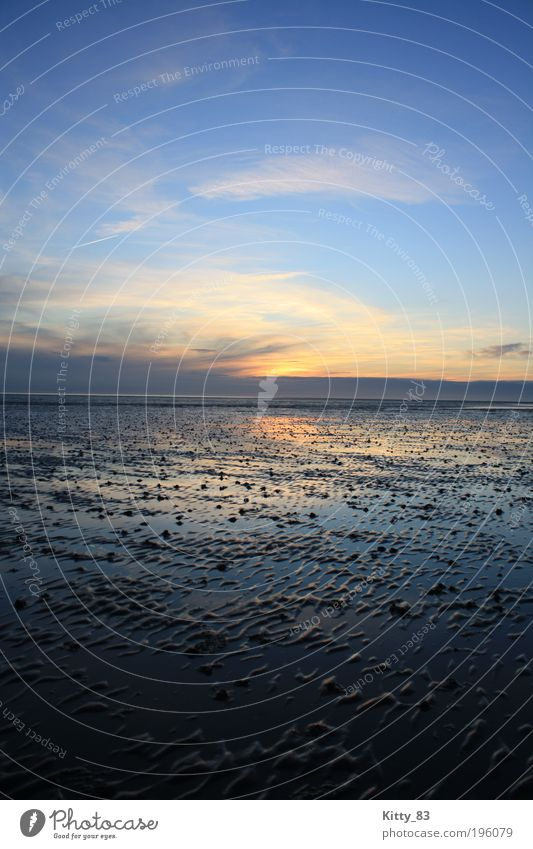 Sunset on the seabed Nature Elements Water Sky Sunrise Beautiful weather Ocean Mud flats North Sea bunch Exceptional Fantastic Infinity Blue Pink Emotions Moody