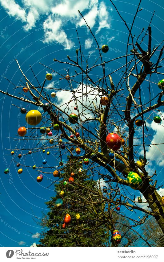 After Easter is before Easter March Garden Tree Bushes Daisy Osterholz Easter egg Bouquet easter jewellery Egg Sky Heaven Clouds Spring Feasts & Celebrations