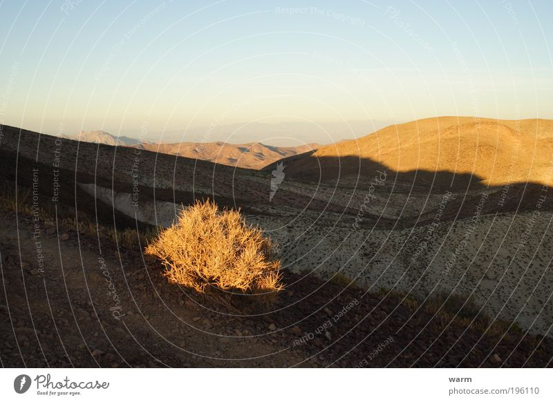 Light and shadow Environment Nature Landscape Sky Cloudless sky Beautiful weather Plant Bushes Mountain Death valley Nationalpark Desert Warm-heartedness Calm