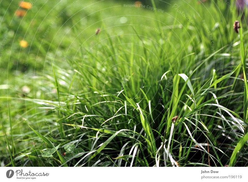 Nature Green Plant Summer Meadow Grass Spring Natural Insect Bee Blade of grass Foliage plant Summery Spring fever Grass green Honey bee
