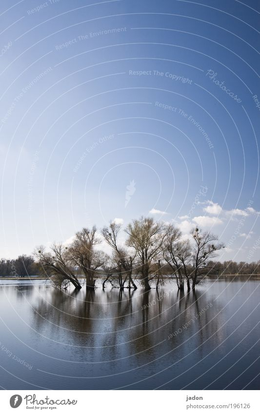 river landscape Nature Landscape Sky Tree River Oder Observe Esthetic Infinity Stagnating Tourism Environment Far-off places Water Flood Mirror image