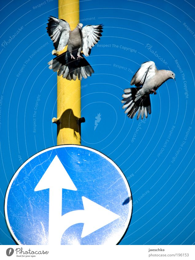 air traffic control Transport Road sign Aviation Pigeon 2 Animal Pair of animals Arrow Funny Blue Yellow Uniqueness Mobility Arrangement Whimsical Divide