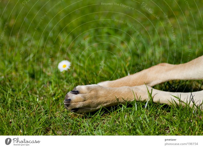 grass green Environment Nature Spring Summer Climate Beautiful weather Flower Grass Blossom Garden Park Meadow Animal Pet Dog 1 Baby animal To enjoy Lie Playing