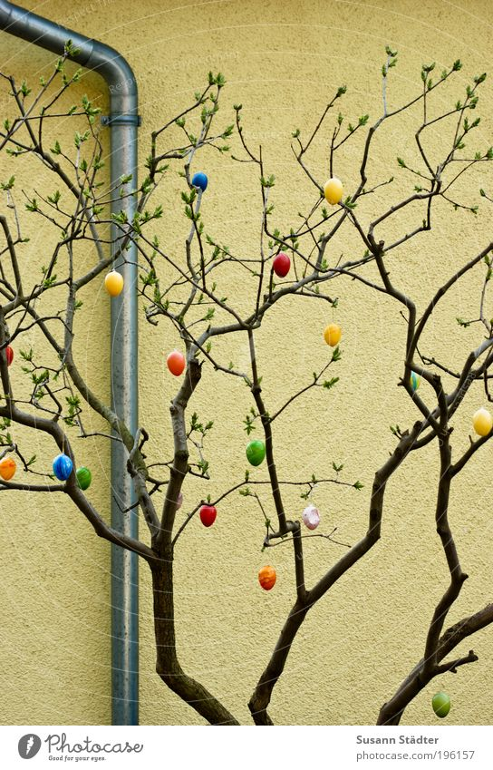 The egg is long gone Decoration Hang Easter egg Sprout Spring Plant Conduit Wall (building) Colour photo Multicoloured Detail Day Branch Twig Exterior shot