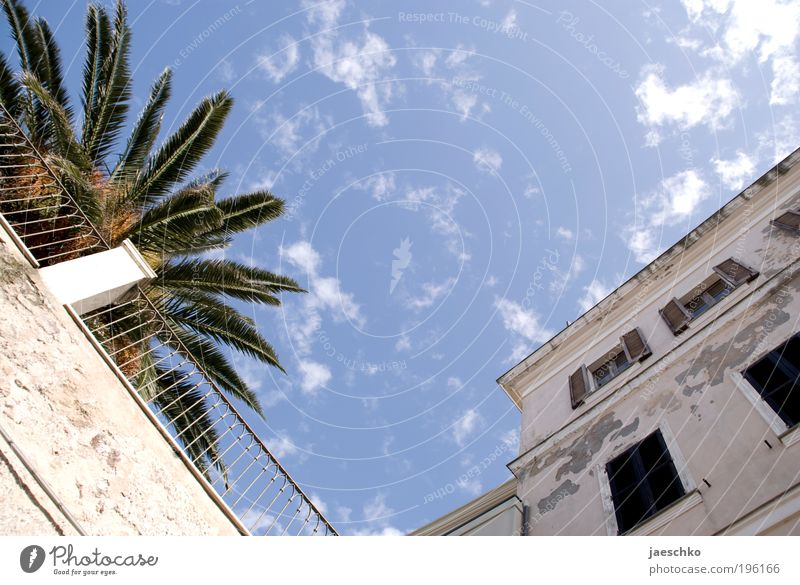Mediterranean Corner Vacation & Travel Tourism Summer vacation Sky Beautiful weather Palm tree Italy Village Small Town Old town House (Residential Structure)