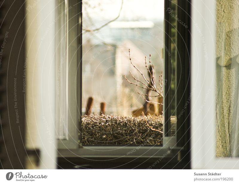 draft Energy industry Landscape Plant Animal Breathe Far-off places Cold Ventilate Window pane Window frame draught Arrangement Energy efficiency Hedge Bushes