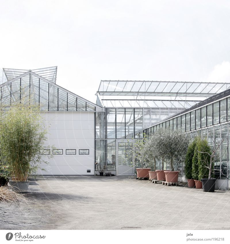 White Tree Plant Building Bright Architecture Glass Bushes Clean Profession Gate Agriculture Manmade structures Workplace Grass Gardening