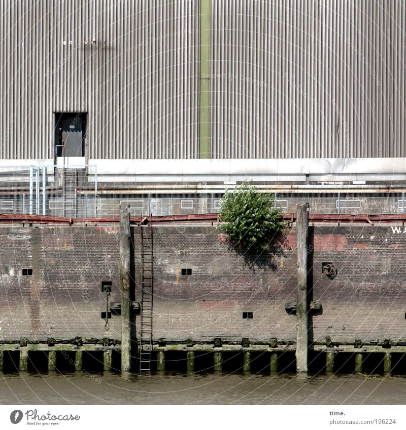 Siesta in the harbour Harbour Jetty Wall (barrier) Water Ladder Exterior shot Beautiful weather Barn Warehouse Door Light Shadow Bushes Anchoring ground Hamburg