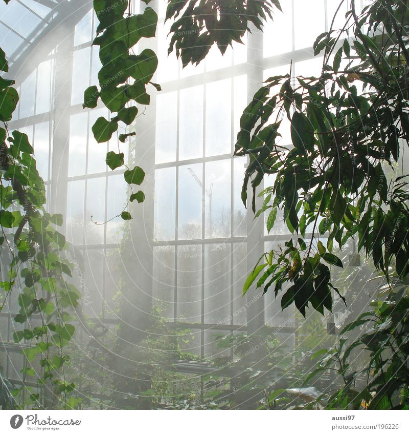 nursery from the inside Market garden Greenhouse Gardener Botany plants Growth air humidity