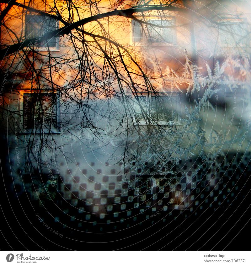 morning glory House (Residential Structure) Facade Window Exceptional Surrealism Living or residing Double exposure Tree Pattern Sunrise Ice Winter 500 Cold