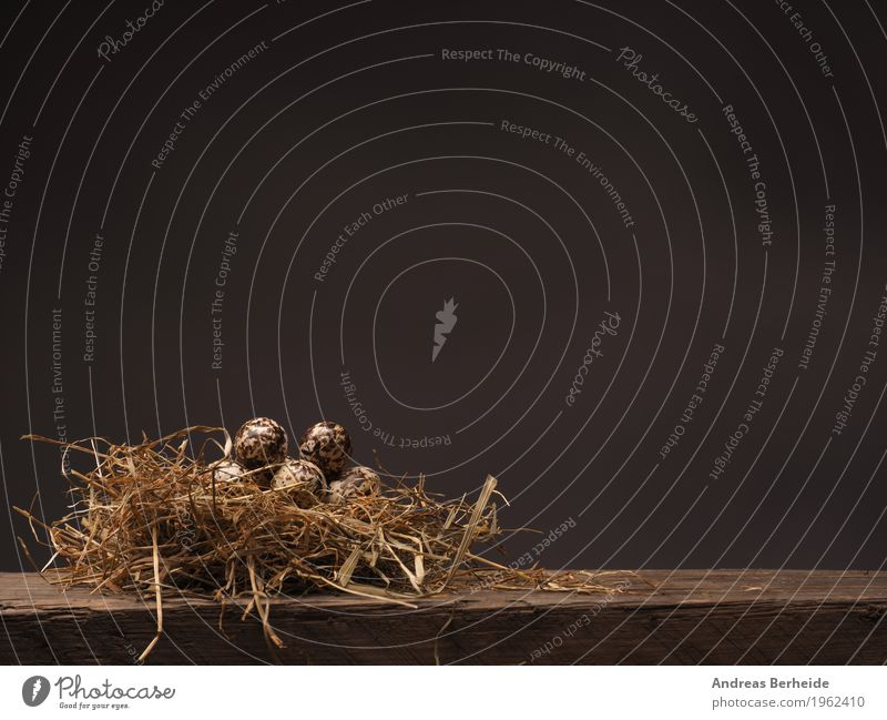 Easter nest Life Nature Jump Background picture brown decoration eat eggs farm feather food fresh grass group happy hay health healthy holiday ingredient Nest