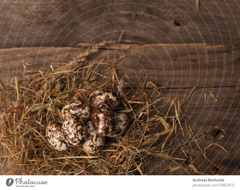 "Easter nest on wooden table Life Nature Old Background picture Nest Protein Symbols and metaphors ""Easter nest Easter eggs,"" Easter egg nest Straw Wooden table"