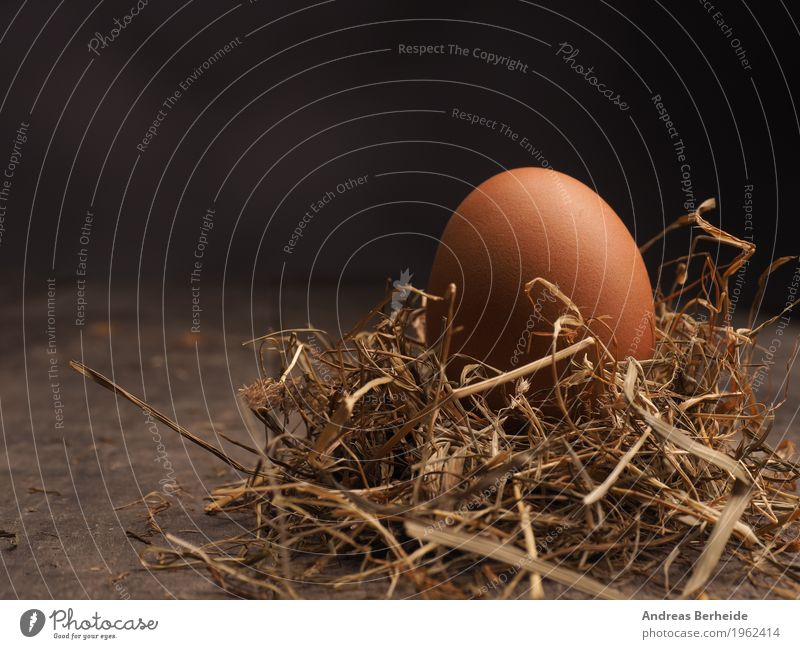Organic egg in straw Food Life Easter Nature Jump brown color colorful decoration diet eat eggs fresh hay healthy holiday ingredient natural Nest organic