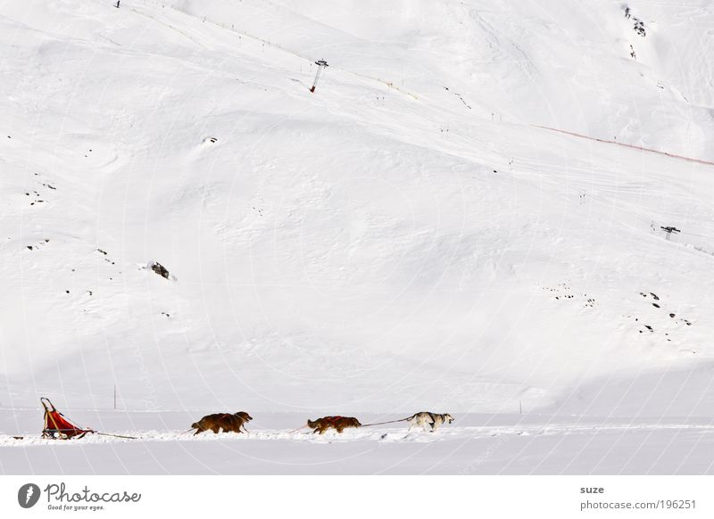 Dog Vacation & Travel White Animal Winter Mountain Cold Snow Movement Funny Bright Ice Speed Adventure Group of animals Frost
