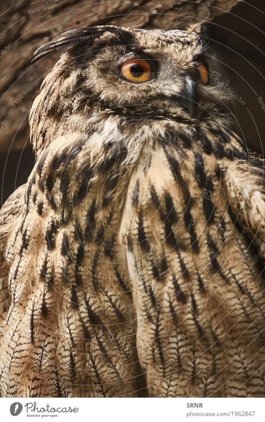 Owl Stares Towards Animal Bird Wild Wild animal Feather Observe Beak Ornithology Bird of prey Carnivore