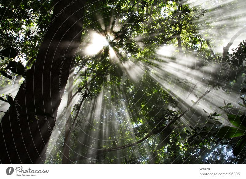 Sunbeams in the Cloud Forest Environment Nature Plant Air Summer Beautiful weather Fog Tree Virgin forest Costa Rica Calm Colour photo Exterior shot Deserted