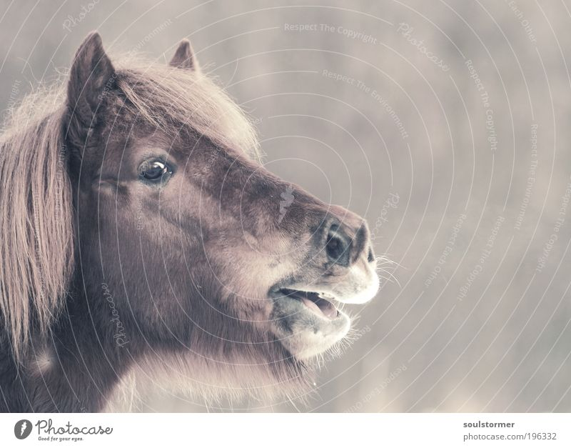 The call for freedom Nature Animal Farm animal Horse Animal face Icelander 1 Breathe Scream Sadness Concern Fear of the future Nerviness Grouchy Loneliness