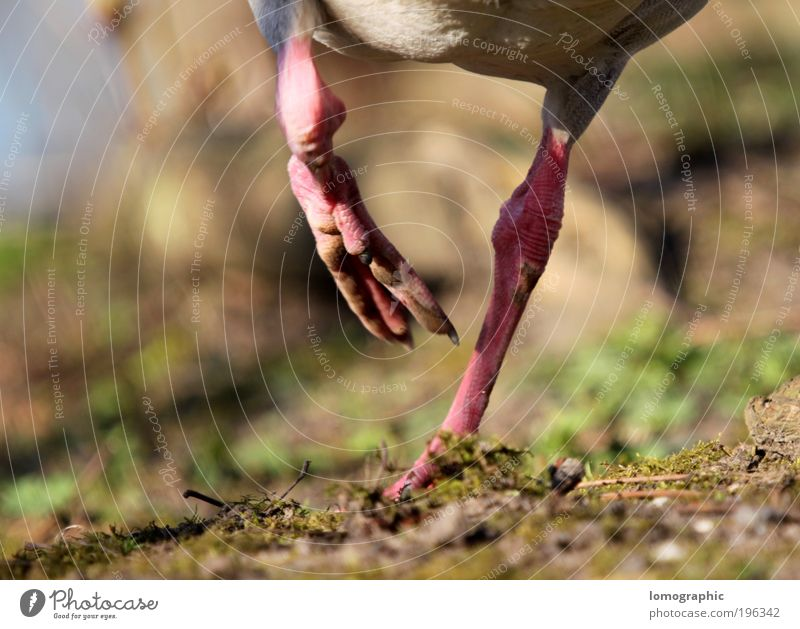 Nature Summer Animal Earth Walking Hiking Free Running Airplane Speed Crazy To go for a walk Duck Paw Animal foot Claw