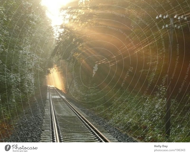 Nature Tree Sun Summer Forest Happy Warmth Air Bright Gold Fog Transport Esthetic Logistics Transience Railroad tracks