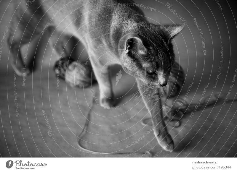 White Black Animal Playing Movement Gray Cat Esthetic Animal face Pelt Silver Paw Pet Black & white photo Light Wool