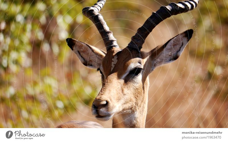 Nature Animal Freedom Wild animal Adventure Observe