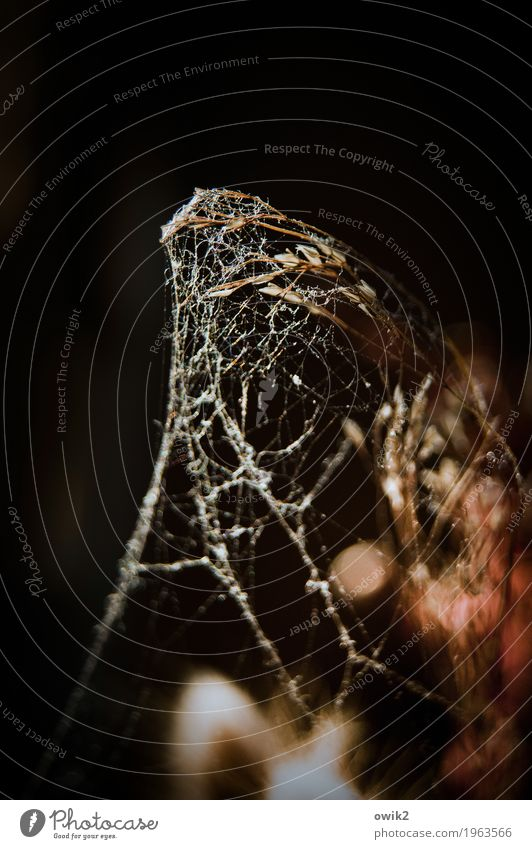 Christo was here Plant Bushes Pot plant Blade of grass Spider's web Cobwebby Cocoon To dry up Old Dark Thin Authentic Natural Dream Sadness Grief Death