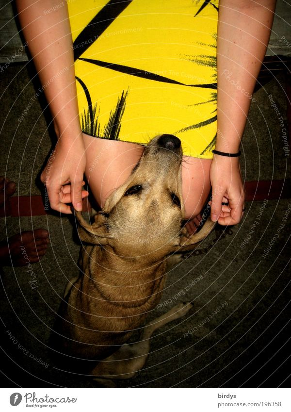 Human being Youth (Young adults) Summer Black Animal Yellow Feminine Emotions Style Happy Dog Legs Adults Esthetic Ear Animal face