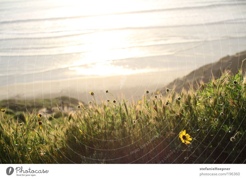 Nature Water Plant Sun Summer Beach Vacation & Travel Ocean Flower Far-off places Relaxation Freedom Environment Spring Coast Moody