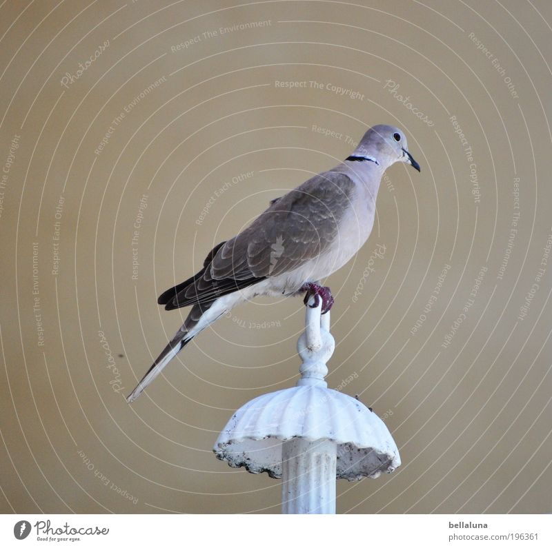 Nature Animal Lamp Bird Elegant Sit Wing Thin Natural Wild animal Beautiful weather Pigeon Claw
