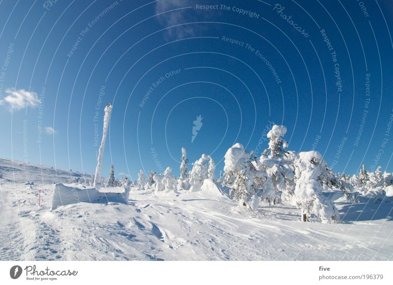 luosto V Vacation & Travel Tourism Trip Far-off places Freedom Winter vacation Winter sports Skis Ski run Nature Sky Clouds Weather Beautiful weather Snow Plant