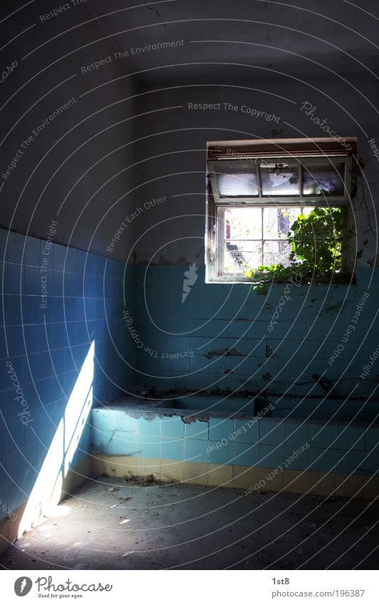 Old Blue White Plant Leaf Black House (Residential Structure) Window Architecture Building Dirty Authentic Future Uniqueness Bathroom Clean
