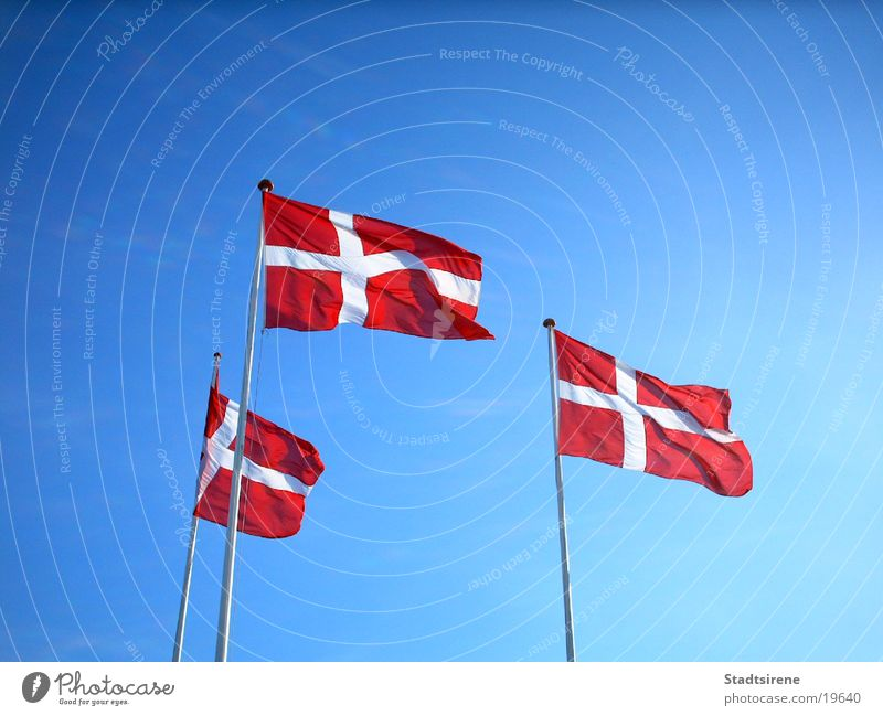 Flags in the wind Vacation & Travel Summer Sky Wind Transport Red White Foreign countries Denmark Blue sky Flag of Denmark Colour photo Exterior shot Day