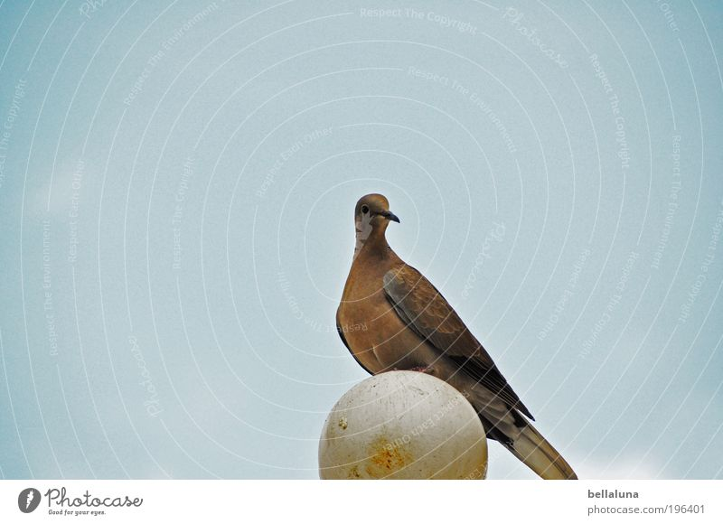 Sky Nature Blue Beautiful Summer Animal Bird Wild animal Uniqueness Beautiful weather Pigeon Cloudless sky