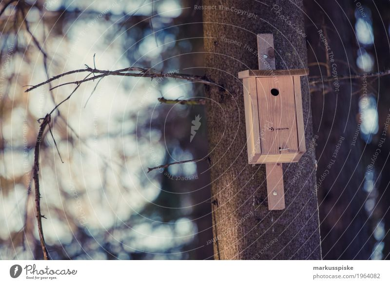 bird house Leisure and hobbies Living or residing Flat (apartment) Garden Environment Nature Landscape Autumn Plant Tree Park Meadow Animal Wing Feed the birds