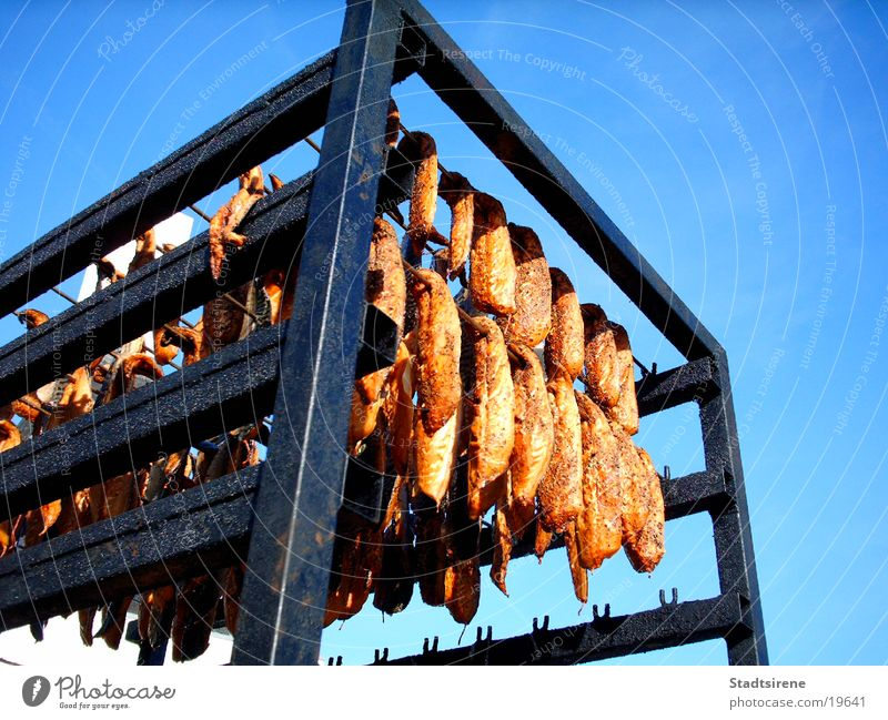 Yummy smoked fish! Fish Nutrition Vacation & Travel Fresh Smoked Denmark Colour photo Exterior shot Day