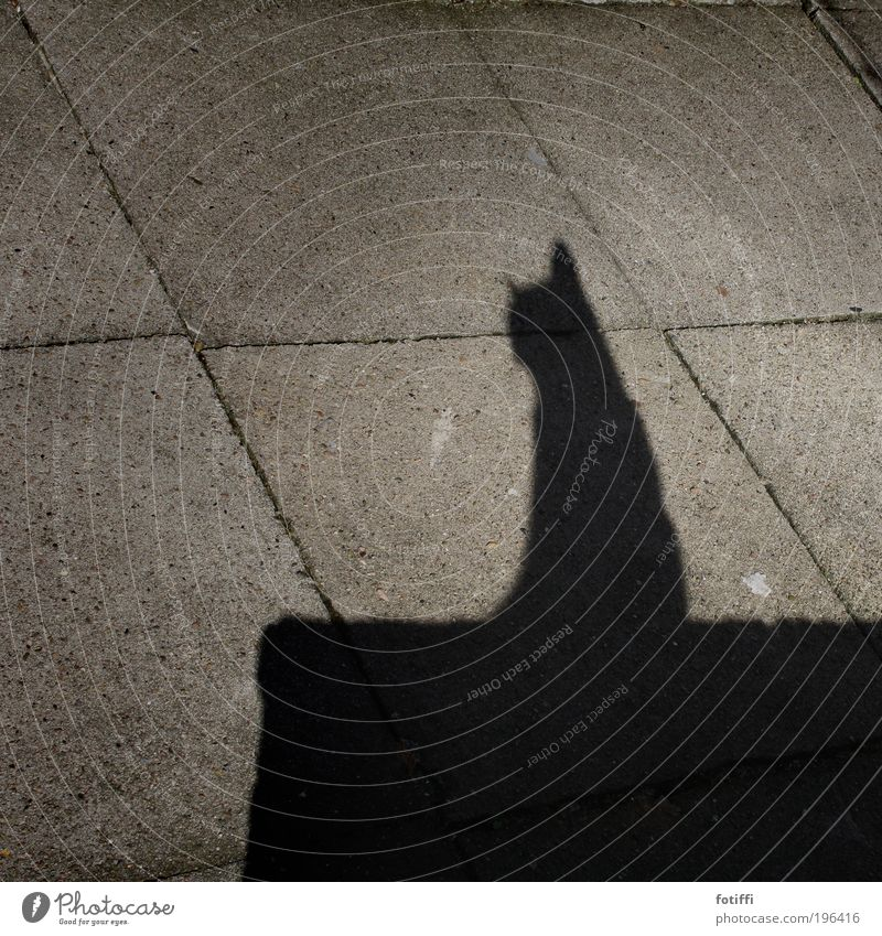 miii.... Deserted Wall (barrier) Wall (building) Pet Cat 1 Animal To enjoy Crouch Sit Dream Beautiful Gray Black Love of animals Serene Self Control Pride