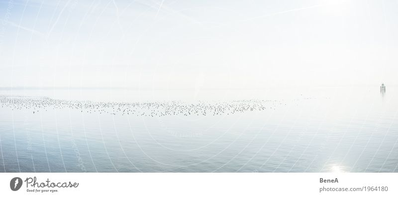 Swarm of birds swims on Lake Constance in the glistening sun Harmonious Relaxation Calm Swimming & Bathing Vacation & Travel Freedom Sun Nature Landscape Animal