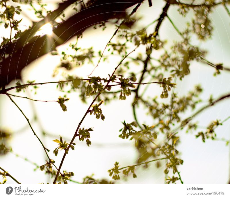 Sky Nature White Green Tree Plant Sun Animal Leaf Environment Landscape Yellow Spring Park Beautiful weather Morning