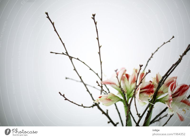 Spring is coming! Flower Bushes Lily Branch Twig Blossoming Fresh Bright Beautiful Moody Spring fever Esthetic Bouquet Flower vase Bright background