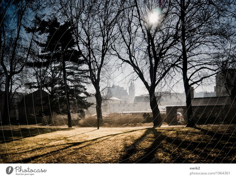 At the city wall Environment Landscape Cloudless sky Horizon Winter Beautiful weather Tree Grass Twigs and branches Park Meadow Bautzen Lausitz forest Germany