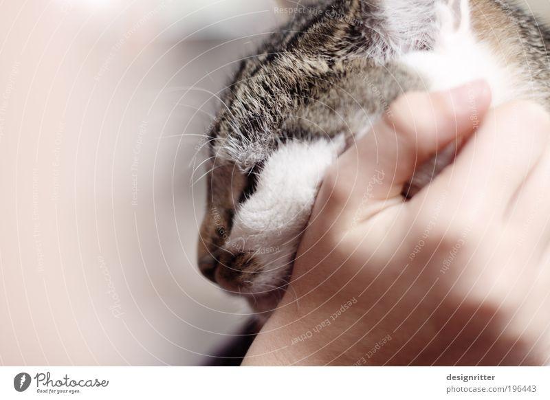 """Rrrrrrrrr rrrrrrrrrrrrrrrr rrrrrrrrrr rrrrrrrr ... Hand Pet Cat Pelt Cuddly Cute Warmth Wild Soft Joie de vivre (Vitality) Trust Safety (feeling of)"