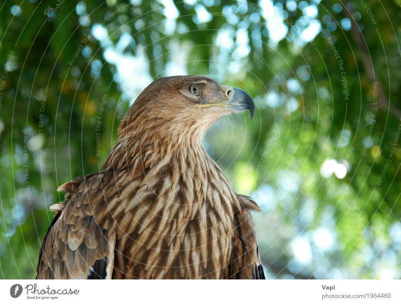 A hawk eagle Sky Nature Plant Blue Green White Tree Landscape Animal Forest Black Environment Freedom Brown Bird Wild