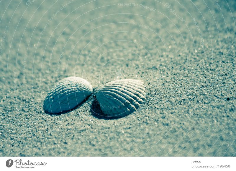 Cuddly Shell Sand Beach Happy Emotions Together Love Cockle Opposite Sandy beach Vacation & Travel Flotsam and jetsam Mussel shell Colour photo Subdued colour