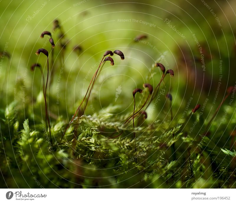 Mo(o)s Def Environment Nature Plant Foliage plant Fresh Green Moss Carpet of moss Seed Woodground Colour photo Subdued colour Exterior shot Close-up