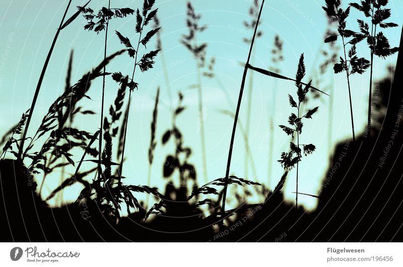 Nature Plant Meadow Environment Grass Park Field Leisure and hobbies Climate Lifestyle Bushes Delicious Joie de vivre (Vitality) To enjoy Intoxicant Breathe