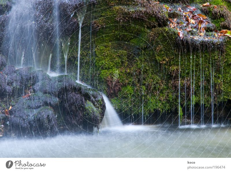 waterfall Nature Water Summer Autumn Moss Forest Virgin forest River bank Waterfall Wet Beautiful Brown Gray Green Colour photo Exterior shot Deserted Day